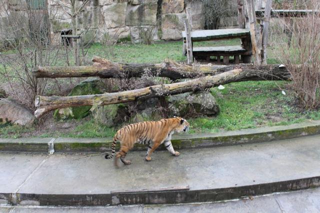 Нажмите на изображение для увеличения Название: Зоопарк1.jpeg Просмотров: 4 Размер:78.3 Кб ID:2124536